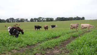 Pasture Move Demonstration