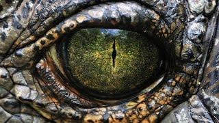 Рептилии и Драконы.