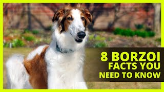 BORZOI 101 | Interesting facts about the Borzoi you probably don't know!
