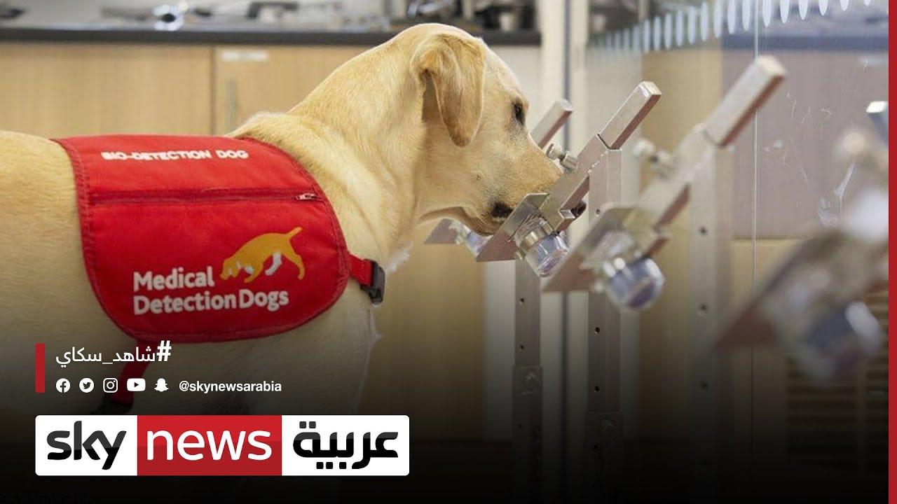 دراسة أميركية تؤكد قدرة الكلاب المدربة على رصد الإصابات  - نشر قبل 2 ساعة