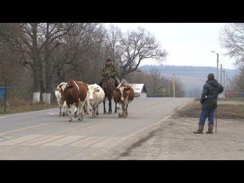 «Сельский порядок». Кочегуры Чернянского района (20.11.2019)