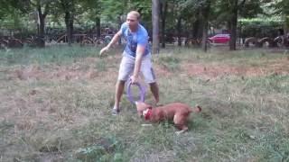 видео Собака нападает на людей, полиция стреляет