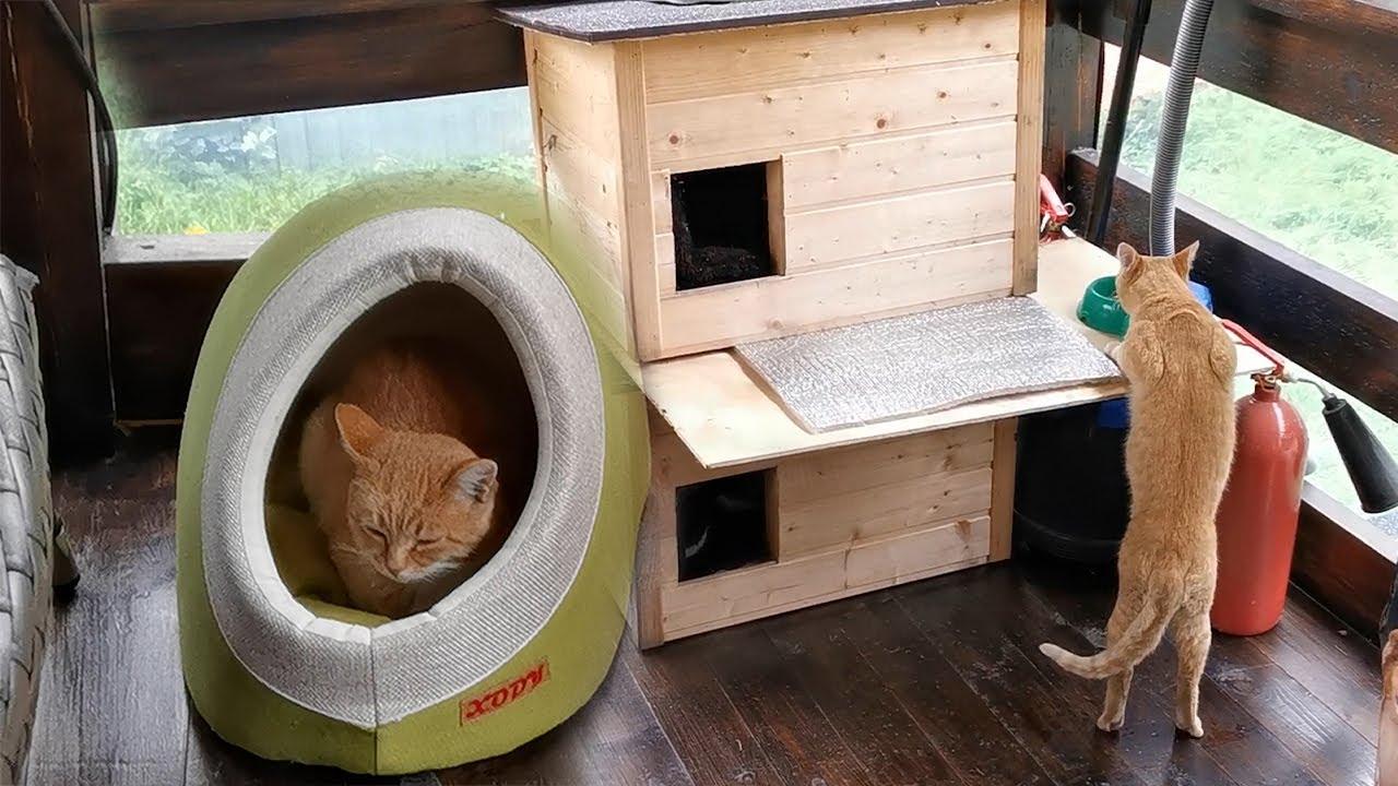 Двухэтажные апартаменты с пристройкой для рыжего уличного кота.