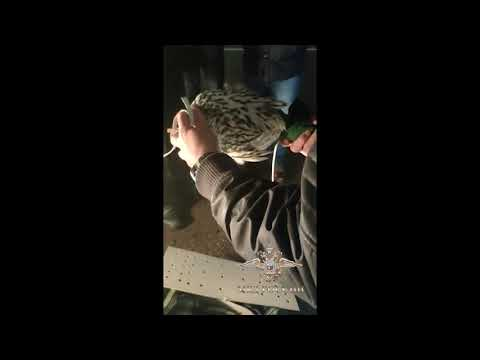 В  аэропорту Домодедово  пресечена попытка вывоза за границу краснокнижных птиц