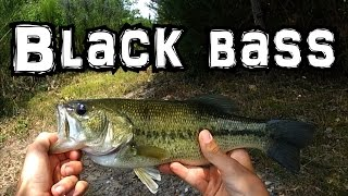 Session de pêche au black bass au leurre en ultra léger - Touche en direct