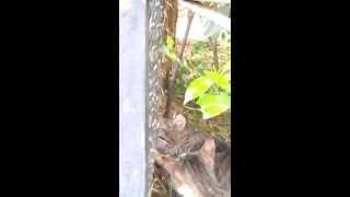 Хитрые кошки украли у скунса кусок мяса ялта зоопарк