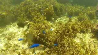 石垣島 米原キャンプ場ビーチ GoProHDHERO2フラットレンズで水中撮影