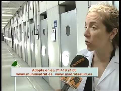 Ana Villa González- Perrera Municipal De Madrid