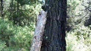Terror en el bosque
