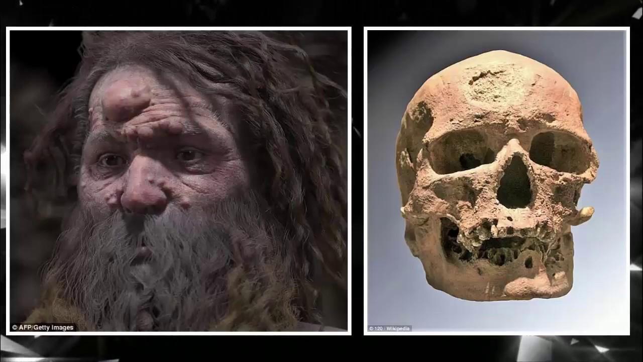 Homo Cro Magnon