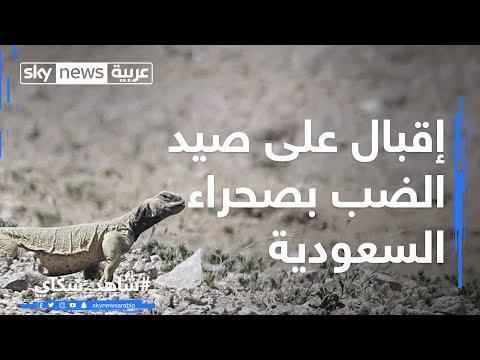 96a8d7b73367a  إقبال على صيد الضب بصحراء السعودية - YouTube