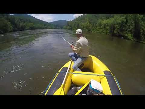 More Small-mouth Bass Action In Asheville, NC- French Broad River