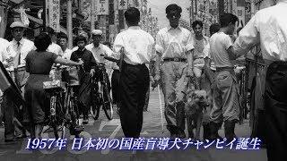 アイメイト(盲導犬)の歴史