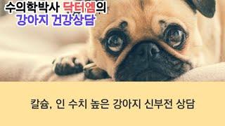 [강아지 신분전 상담] 칼슘, 인 수치 높은 강아지 신…