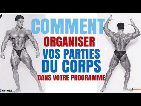 Musculation: Comment Organiser votre Programme |  Parties du Corps
