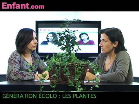 G n ration colo les plantes d polluantes youtube for Plantes depolluantes