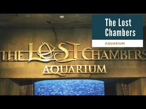 The Lost Chambers Aquarium- Atlantis The Palm Dubai