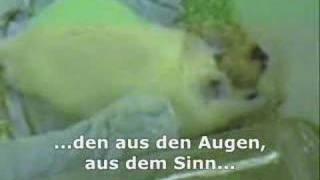 Tierversuche (Dritte Wahl - Schreie hinter Glas)
