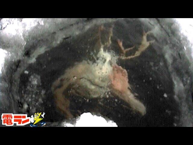 【衝撃】氷漬けになっていた奇妙なもの8選