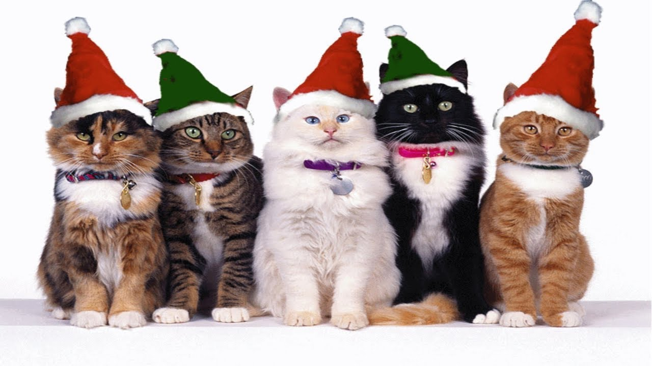 Sp cial no l vid os wtf 1 joyeux no l de la part des chats youtube - Image de chat de noel ...