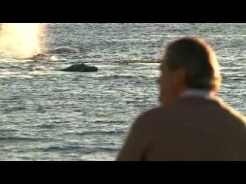 Gunter Pauli: Blue Economy inspired by whales