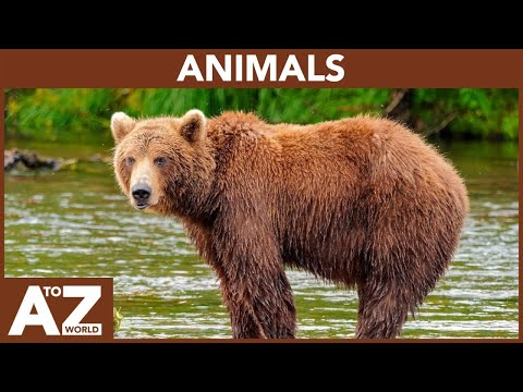 A To Z Of Animals | ABC Of Animals Starting From A To Z