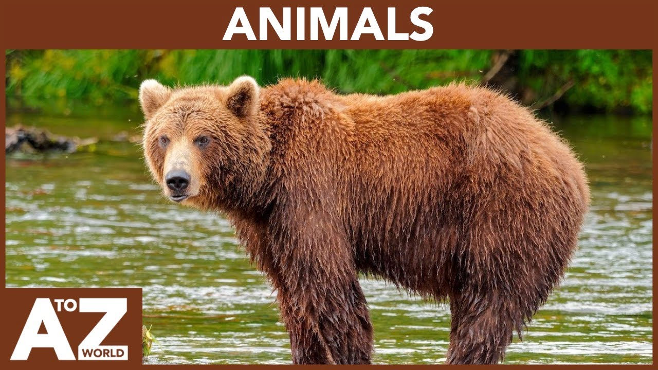 A To Z Of Animals Abc Of Animals Starting From A To Z Youtube
