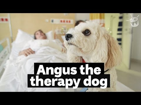 Hack Hanging Out With Angus The Therapy Doggo