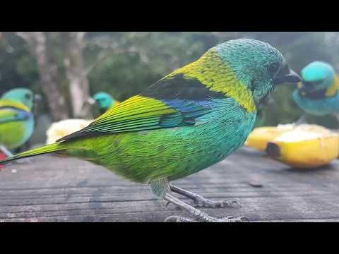 Alimentação de pássaros - Legado das Águas