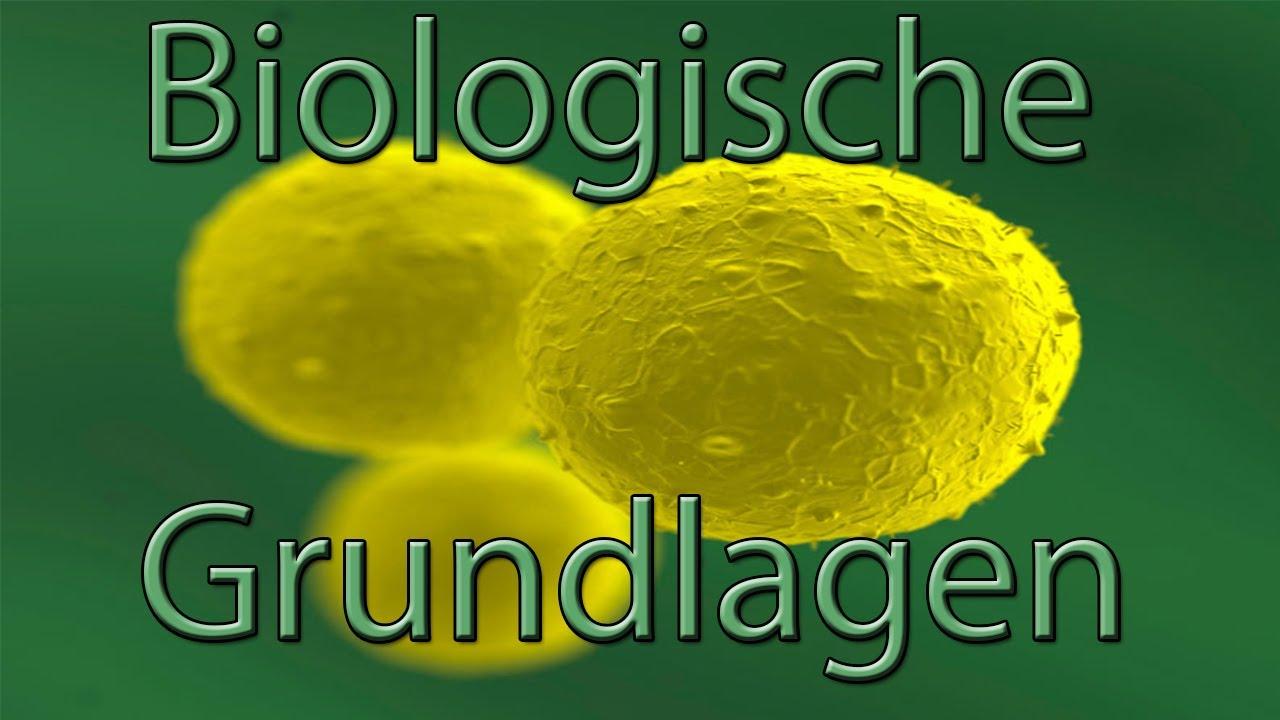 Biologische Grundkenntnisse - Die menschlichen Zellen ...