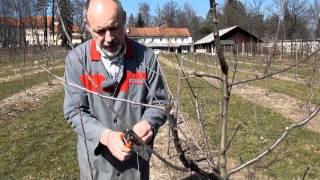 Repeat youtube video Zimska rez sadnega drevja