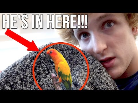 Thumbnail: SNUCK MY BIRD ONTO THE PLANE!