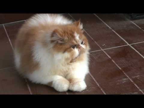 Download 95+  Gambar Kucing Yg Lucu Banget Lucu HD