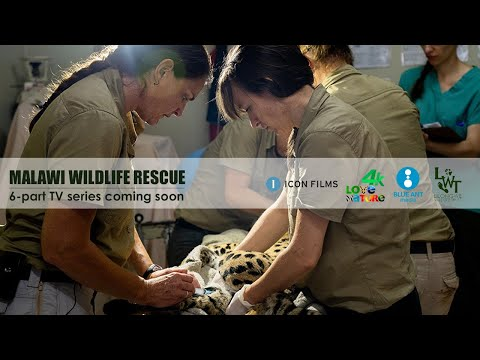 Malawi Wildlife Rescue TV Series