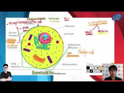 ตัวอย่างการสอน ตะลุยโจทย์วิทยาศาสตร์ ป.6เข้าม.1 โดยพี่ SUN เล่ม 3