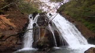日本熊森協会 九州ブロック 自然観察会 2014 11