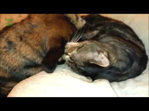 FuNNY CATS VIDEO   FUNNY CATS COMPILATIONS   FANNY VIDEO   Funny Animals Funny Pranks Funny Failsvia