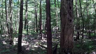 Visiting the Hemlock Swamp at Poestenkill Community Forest
