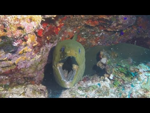 Scuba Diving with Ocean Encounters, Curacao, September 2017