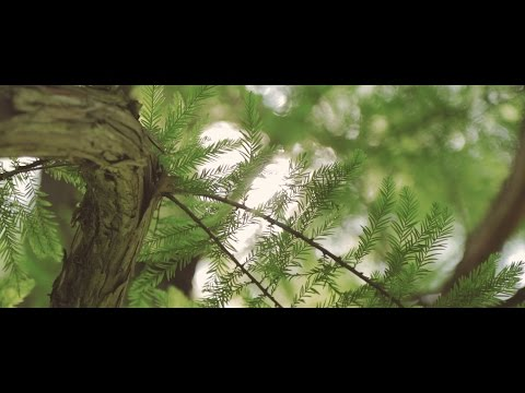 Canon 80D: Video Samples (Graded)