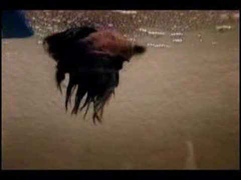 Betta Fish Breeding with a l..