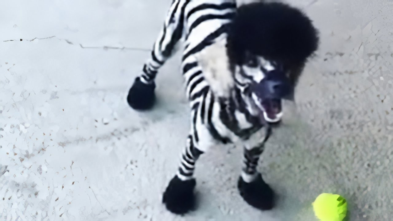 "Meet Steve, the adorable ""Zebroodle"" puppy"