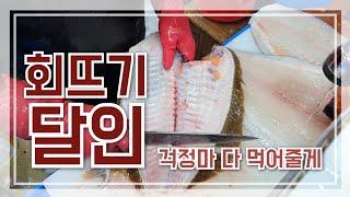 예술적 경지의 회뜨기/주문진항