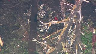 RAW: SkyKING flies over wreckage of stolen plane that crashed on Ketron Island