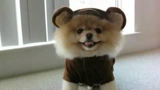 Фотографии самых милых щенков в мире.