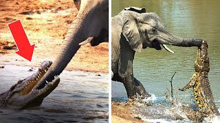 10 Animals That Can Kill An Elephant Easily