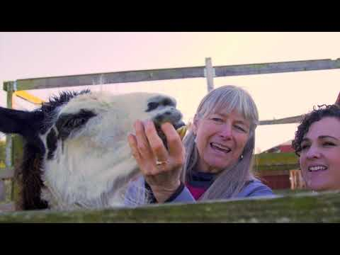 2019 Nonprofit of the Year - Animals as Natural Therapy