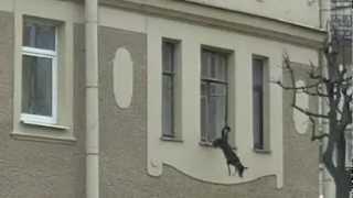 Собака выпрыгнула из окна. Жива здорова! Ищем доброго хозяина! Санкт-Петербург