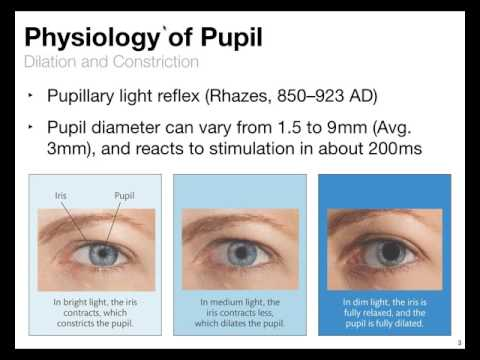 Pupil Data - Psychology and Analysis