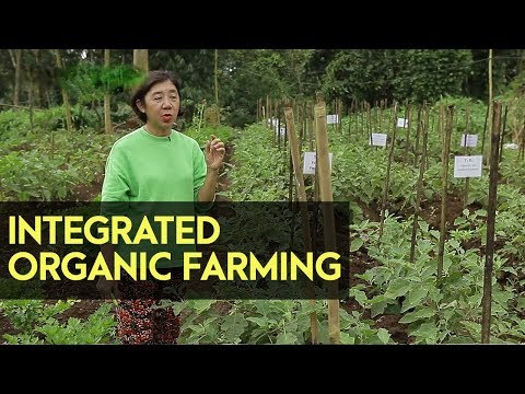 Integrated Organic Farming | LIKAS Organization | Agribusiness